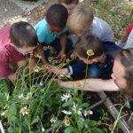 Fête du jardin à l'école le 6 juin 2019